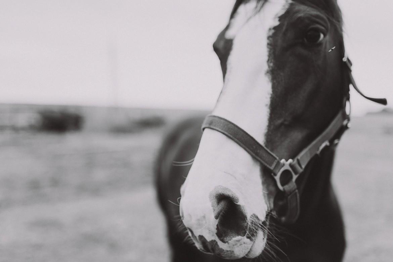 horseback_photo_session_0002.jpg